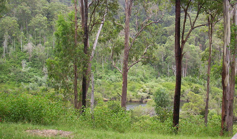 River campground, Nymboida National Park. Photo: D Redman