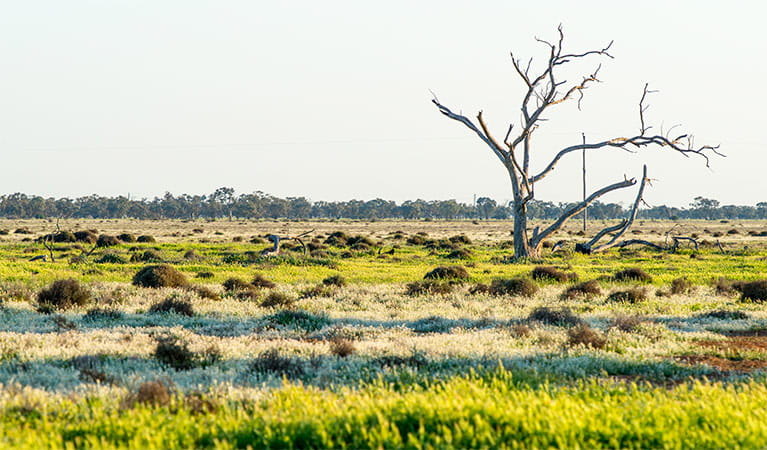 Grasslands in Oolambeyan National Park. Photo: John Spencer