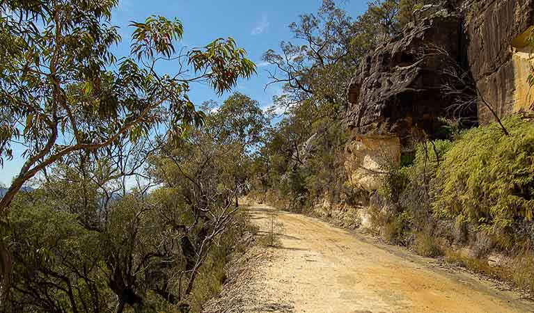 Womerah Range trail, Parr State Conservation Area. Photo: OEH