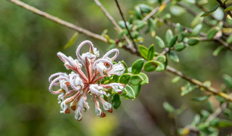 A flower blooming,  Royal National Park. Photo: John Spencer