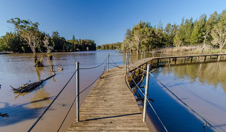 Wetlands boardwalk, Longneck Lagoon walking track, Scheyville National Park. Photo: John Spencer