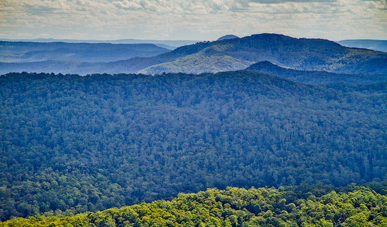 Mountains of Toonumbah National Park. Photo: Robert Ashdown