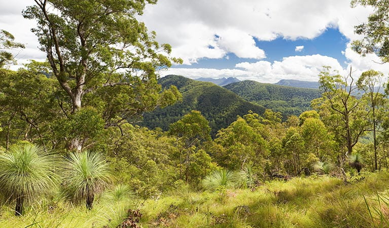 Sherwood Lookout, Toonumbar National Park. Photo: Hamilton Lund