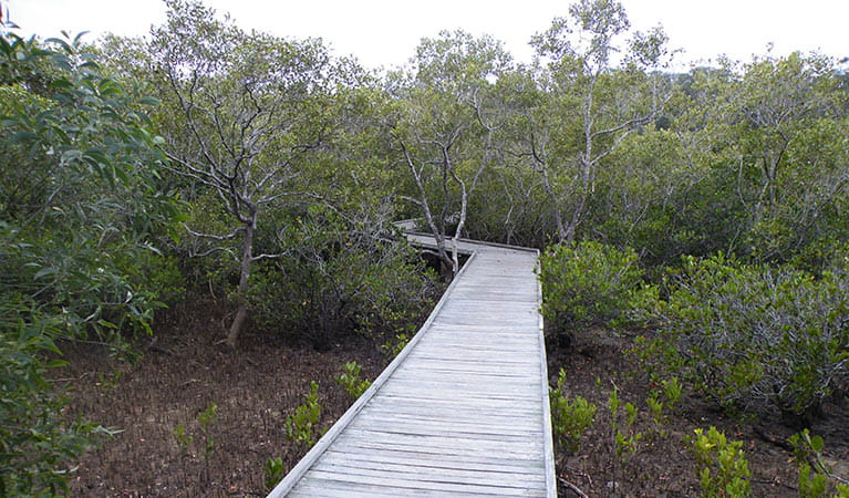 Boardwalk, Tweed Head Historic Site. Photo: OEH
