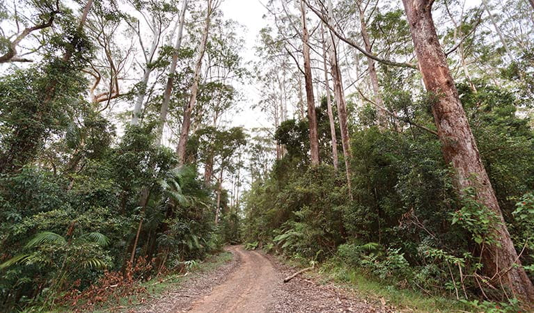 Forest trail, Ulidarra National Park. Photo: Rob Cleary/Seen Australia