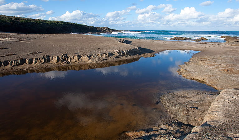 Pinny Beach, Wallarah National Park. Photo: Susan Davis