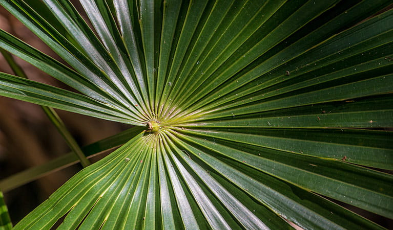 Cabbage Palm loop, Wallingat National Park. Photo: John Spencer