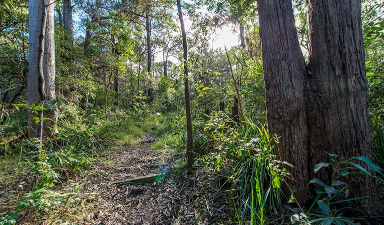 Walking track through the forest, Wallumatta Nature Reserve. Photo: John Spencer