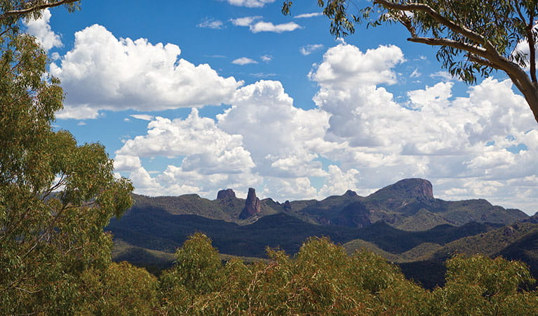 The view across the mountain range, Warrumbungle National Park. Photo: Rob Cleary