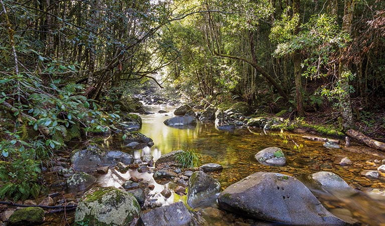 Forest stream on Washpool walk, Washpool National Park. Photo: Rob Cleary