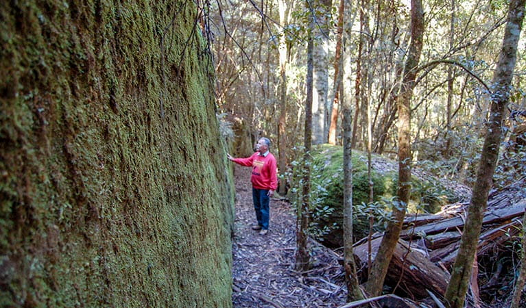 A man enjoys the forest, Watagans National Park. Photo: OEH