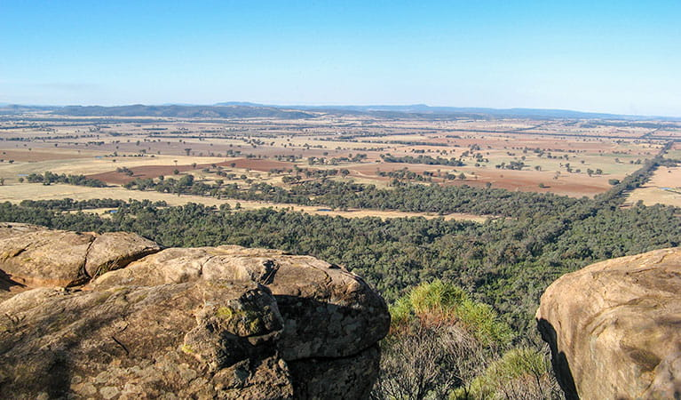 Eualdrie lookout, Weddin Mountains National Park. Photo: OEH