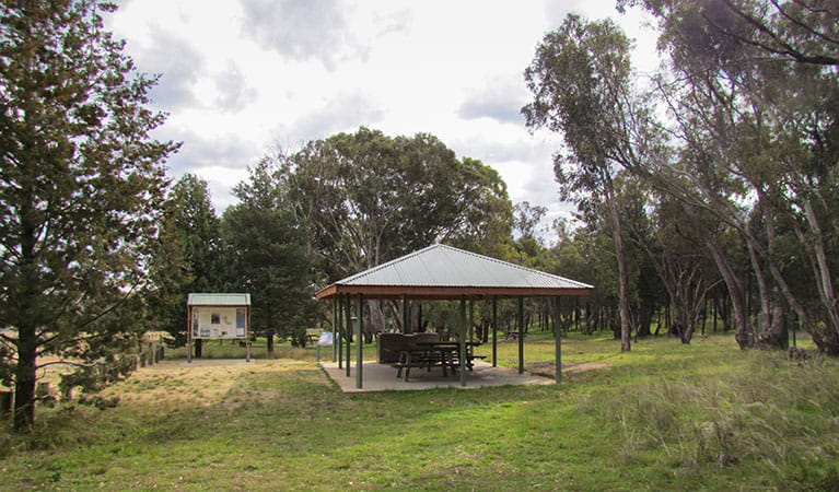 Ben Halls campground, Weddin Mountains National Park. Photo: M Cooper