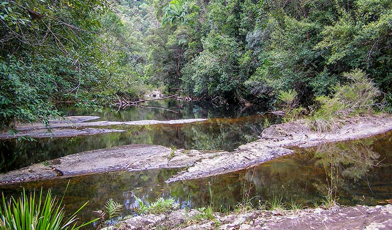 A still creek, Whian Whian State Conservation Area. Photo: OEH