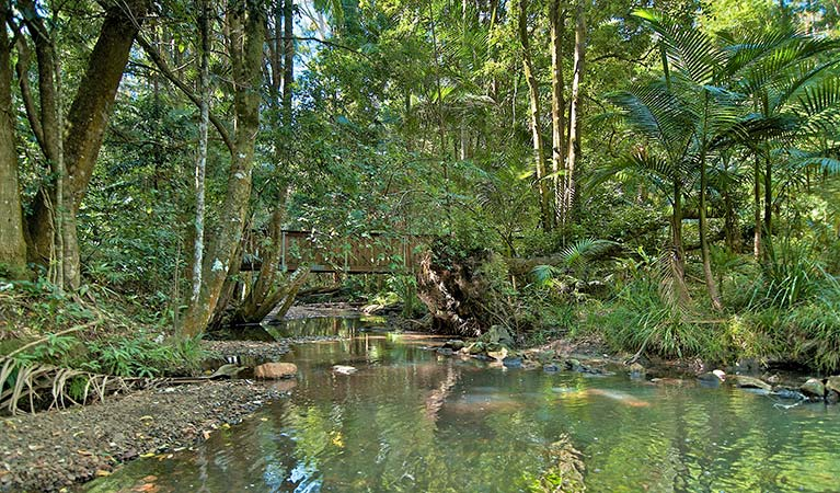 Rummery Creek, Whian Whian State Conservation Area. Photo: John Spencer