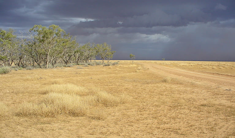 Merton trail, Willandra National Park. Photo: David Egan