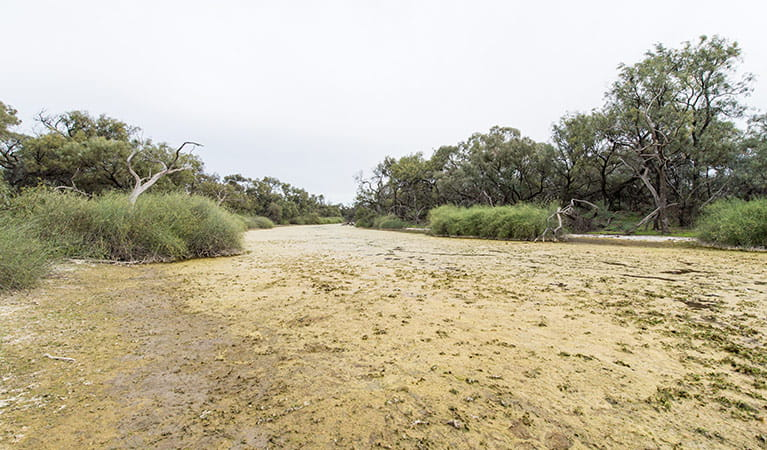 Dry creek, Willandra National Park. Photo: John Spencer