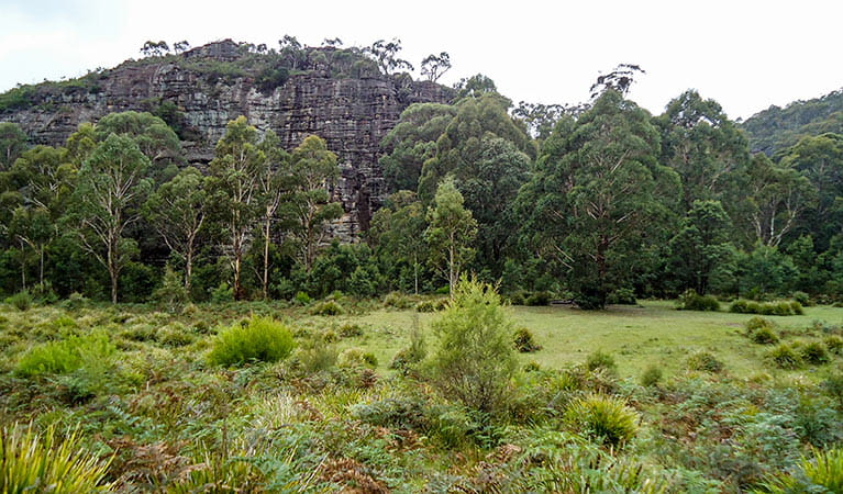 Deep Pass campground, Wollemi National Park. Photo: N Stone