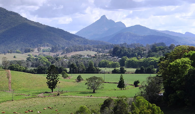 Distant mountains, Wollumbin National Park. Photo: D Hofmeyer