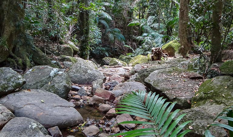Rainforest stream on lyrebird track, Wollumbin National Park. Photo: D Hofmeyer