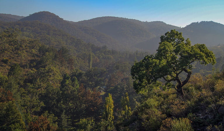 The mountains and forests of Wombeyan Karst Conservation Reserve. Photo: Stephen Babbka