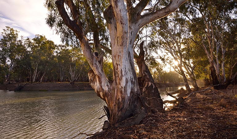 Murrumbidgee River, Yanga National Park. Photo: Gavin Hansford