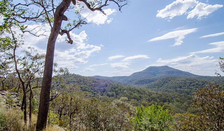 View of Mount Yengo , Mount Yengo loop trail, Yengo National Park. Photo: John Spencer