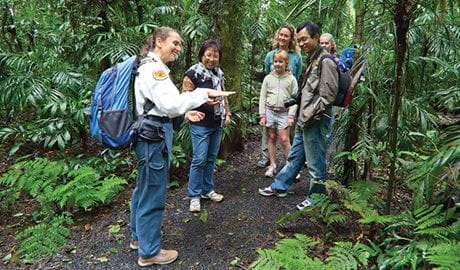 Volunteer guides visitors through rainforest, Dorrigo National Park. Photo: Rob Cleary/Seen Australia