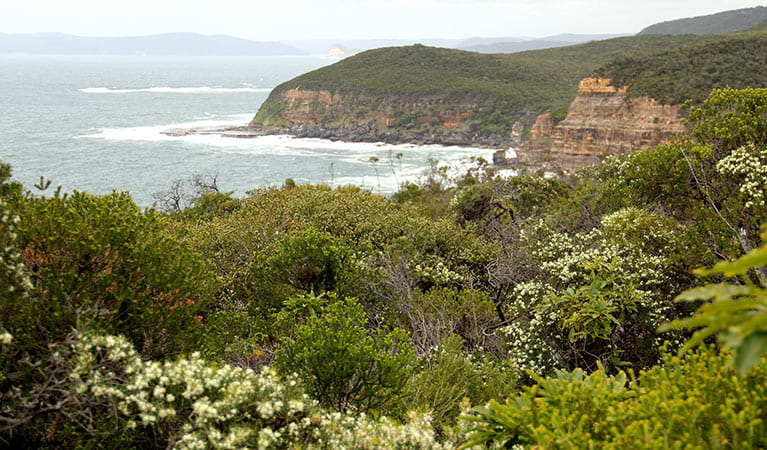 Bouddi vegetation, Bouddi National Park. Photo: J Yurasek/OEH