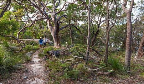 Volunteers participating in Discovery tour, Ku-ring-gai Chase National Park. Photo: D Finnegan