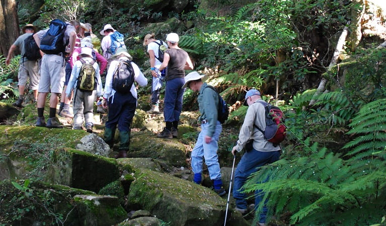 Volunteers on a foxground bushwalk in Minnamurra Rainforest, Budderoo National Park. Photo: Peter Kennedy