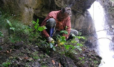 Great Grose weed walk, Blue Mountains National Park. Photo: Vanessa Richardson/NPWS