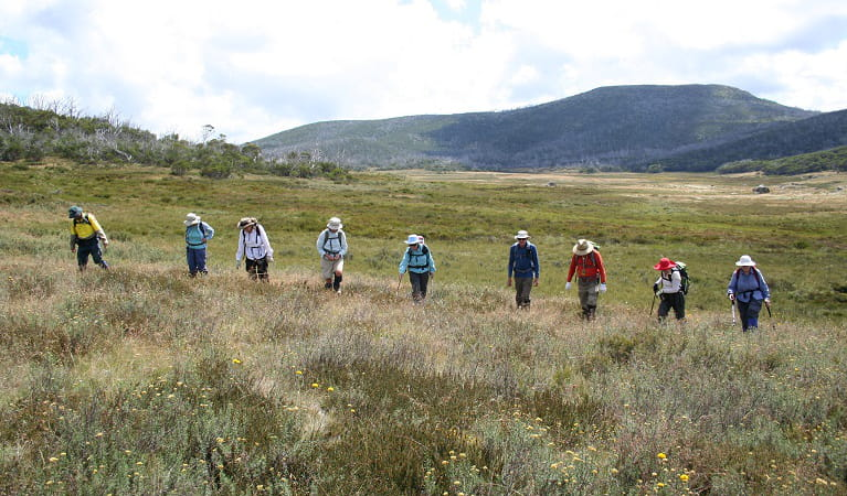 Volunteers surveying for orange hawkweed at Cool Plain (Round Mountain), Kosciuszko National Park. Photo: Jo Caldwell