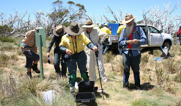 Volunteers participate in hygiene protocols at Fifteen Mile Ridge, Kosciuszko National Park. Photo: Jo Caldwell.