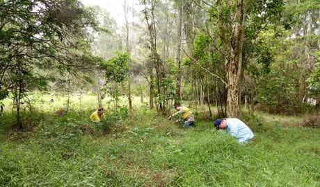 Volunteers hard at work in Tuggerah Nature Reserve. Photo: Nicola Booth © DPIE