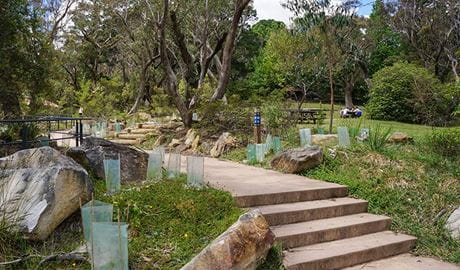 Regeneration in Wentworth Falls picnic area, Blue Mountains National Park. Photo: Steve Alton