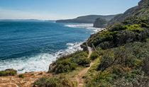 Mount Bouddi walking track, Bouddi National Park. Photo: John Spencer