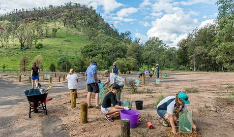 Volunteers participating in bush regeneration, Warrambungle National Park. Photo: John Spencer
