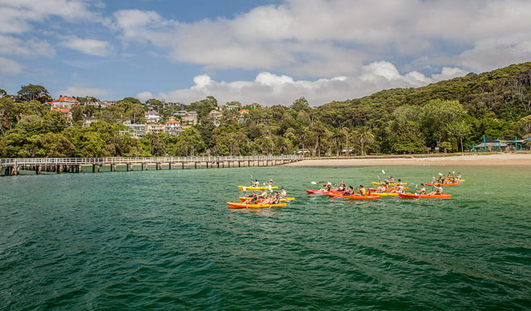 Corporate volunteering and team building experiences, Sydney Harbour National Park. Photo: David Finnegan