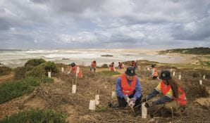 Volunteers planting in Tomaree National Park. Photo: John Spencer/DPIE