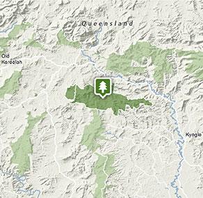 Toonumbar National Park Nsw National Parks