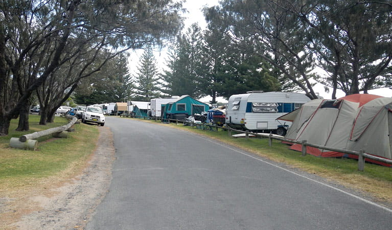 Trail Bay campground, Arakoon National Park. Photo: Barbara Webster/NSW Government