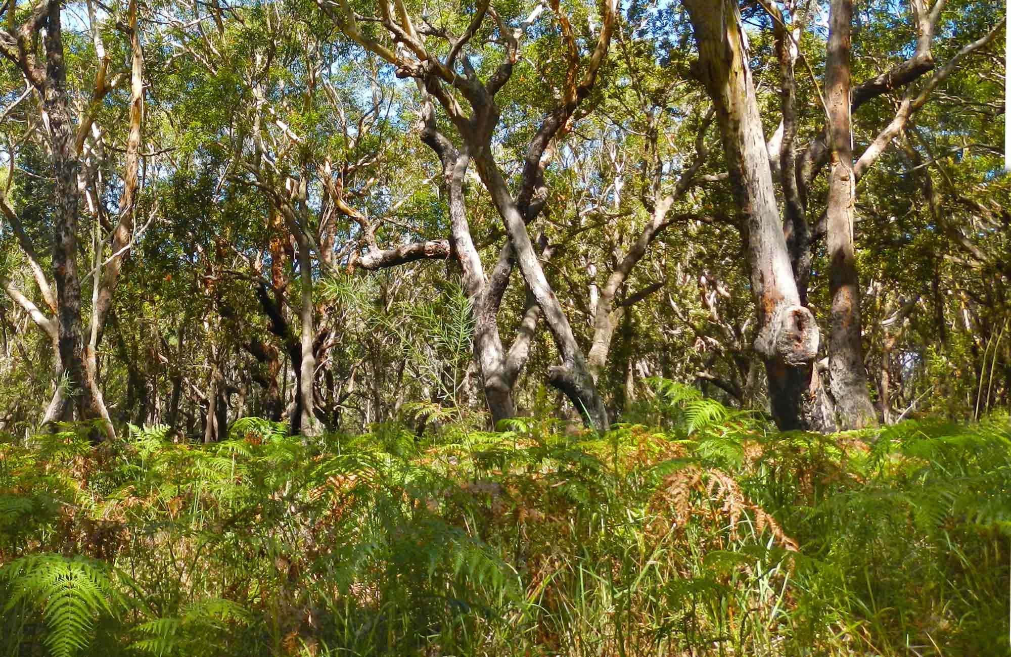 Gum trees. Photo: Debby McGerty