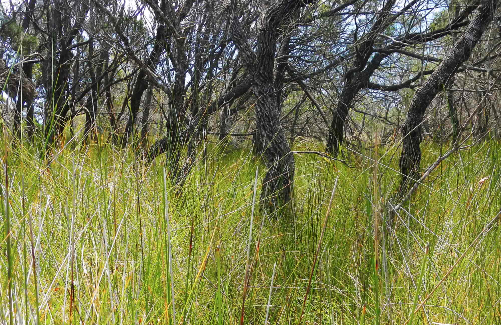 Swamp grass. Photo: Debby McGerty