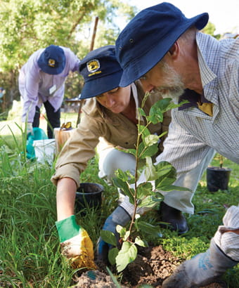 Volunteers help with bush regeneration in Yuraygir National Park. Photo: Nick Cubbin/OEH.