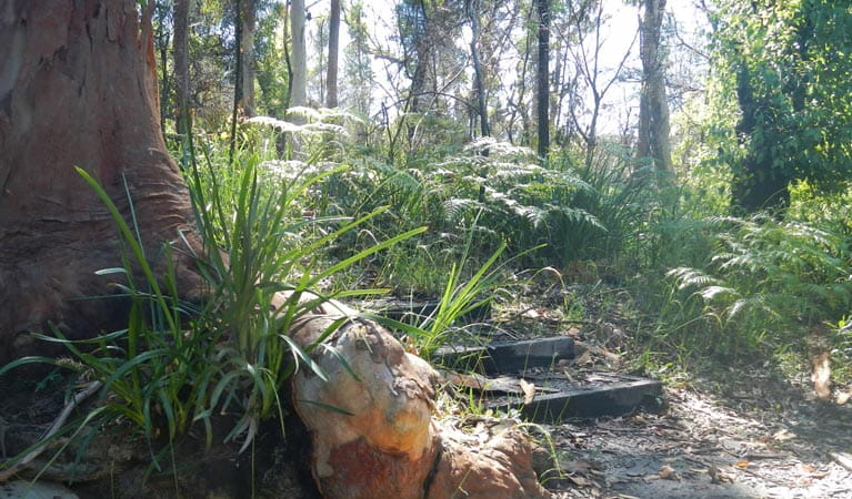 Trees and ferns beside a walking track. Photo: Debby McGerty