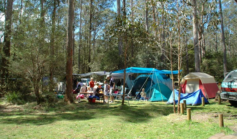 Thungutti campground, New England National Park. Photo: Barbara Webster/NSW Government
