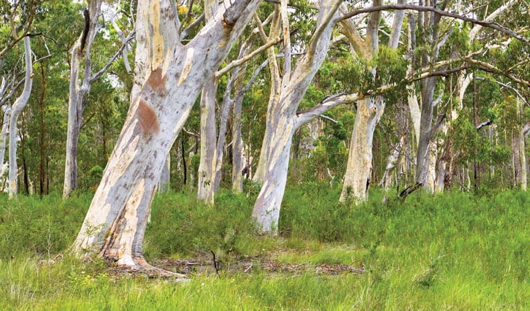 Trees along the Freshwater track, Yuraygir National Park. Photo: Rob Cleary