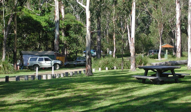 Chaelundi Campground, Guy Fawkes River National Park. Photo: Barbara Webster/NSW Government