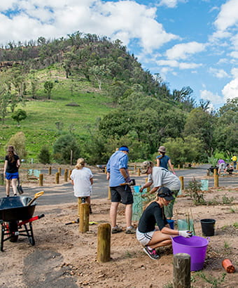 Tree planting at Warrumbungle National Park. Photo: John Spencer/OEH